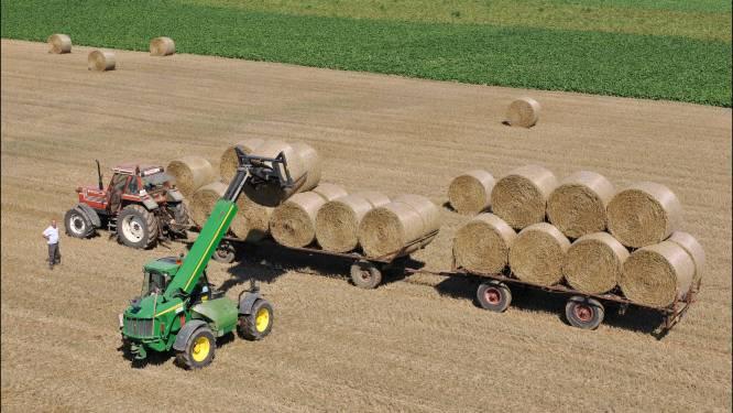 200 strobalen en 16 tractoren: Boerentrots wil sector positief in de kijker zetten bij doortocht Ronde van Vlaanderen