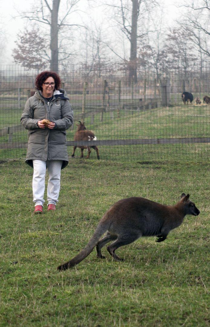Wendy Gevers tussen haar wallaby's en andere dieren.