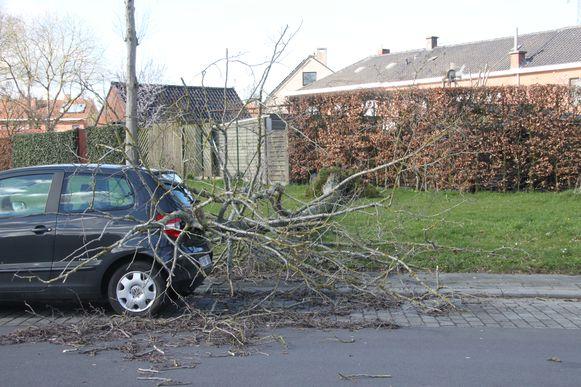 In Izegem hefft een ontwortelde boom op een haar na een geparkeerde wagen gemist.