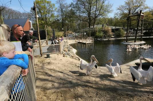 Het 'nieuwe' onderkomen van de pelikanen.