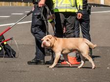 Honden dreigen A50 bij knooppunt Ewijk op te lopen: Rijkswaterstaat houdt verkeer op om ze te vangen