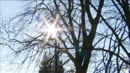 De lentekriebels zijn in het land