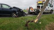 Crash tegen boom in Avekapelle, bestuurder ongedeerd