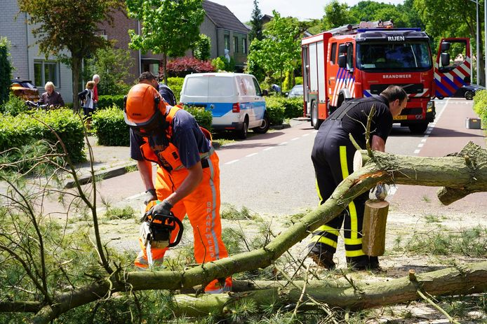 De brandweer zaagt de boom om in Rijen.