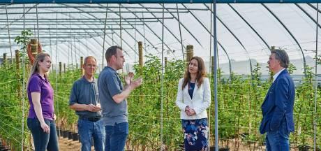 Barmeiden verkopen nu asperges in Olland