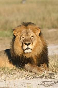 Trofeejager schiet zoon van beroemde leeuw Cecil neer