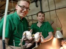 Jaar uitstel voor mega-varkensstal bij Aadorp