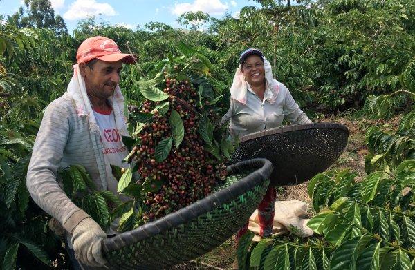 Prijzen koffie en suiker kelderen: De laagste prijs in 10 jaar