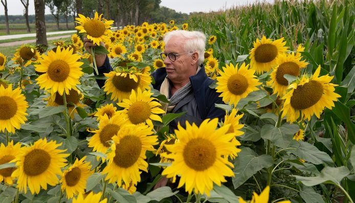 Theo van der Gun tussen de zonnebloemen.