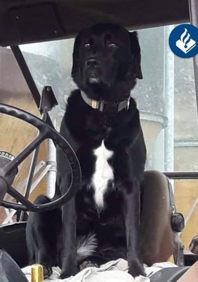 De hond overleed bij de aanrijding in Haaksbergen