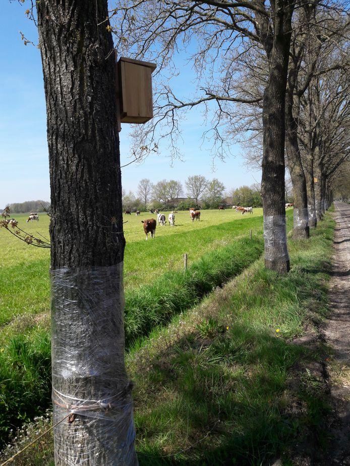 Plastic folie én mezenkastjes in het buitengebied van Moergestel als wapens in de strijd tegen de eikenprocessierups