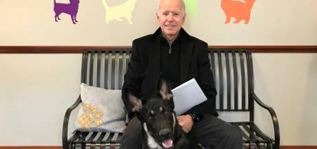 Une cérémonie d'investiture officieuse pour Major, le chien de Joe Biden