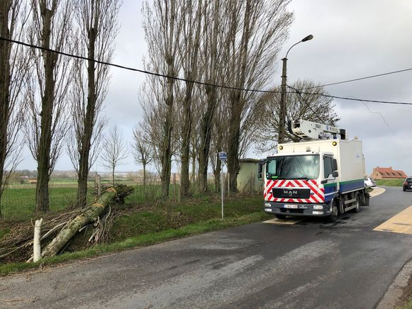 In Geluwe kwam een boom op elektriciteitskabels terecht.