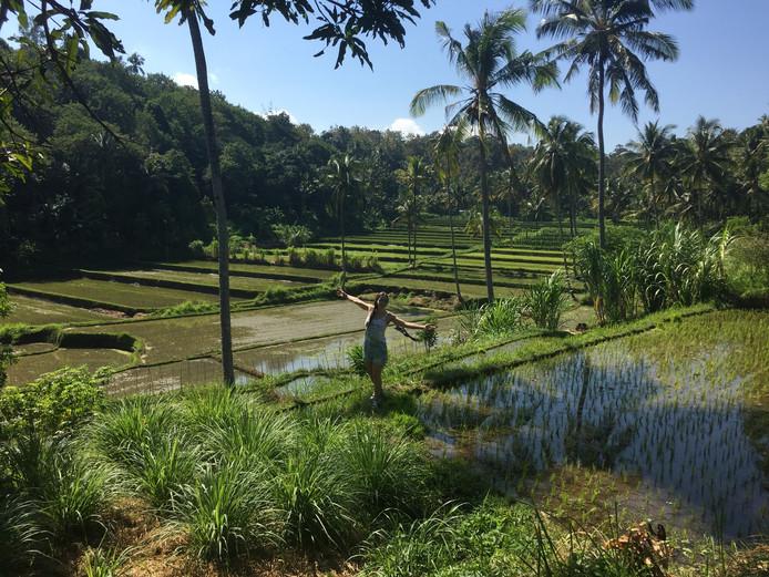 Een rijstveld op Bali.