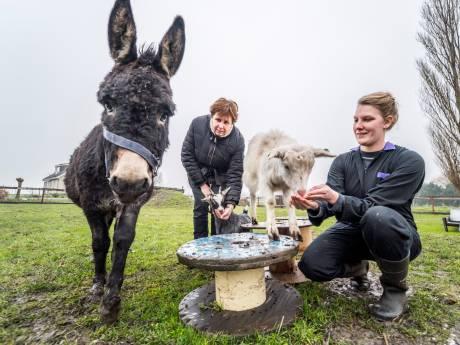 Zorgboerderij voor mensen die steun kunnen gebruiken: 'We willen fijne plek bieden'