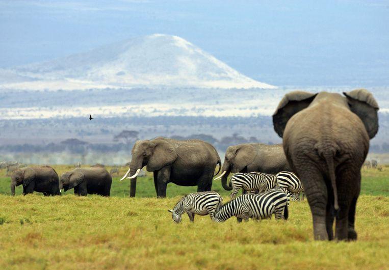 Olifanten in Kenia. Beeld Reuters