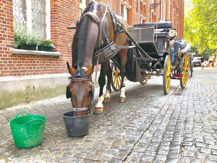 De koetsen in Brugge mogen bij temperaturen boven 30 graden niet meer uitrijden.