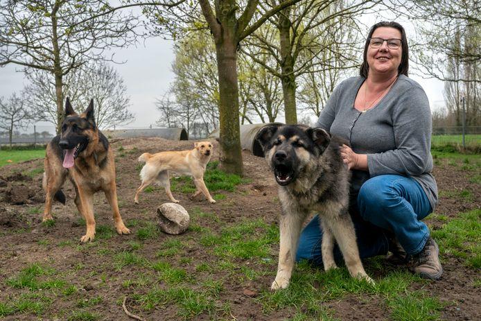 Hetti Bouman, een van de beheerders, met een stel asielhonden. Deze foto is voor de coronacrisis gemaakt.