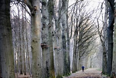 Bomenkap Ulvenhoutse  bos begint in augustus
