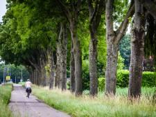 Dorpsvereniging teleurgesteld: 'Waardeloos dat slechts één boom het overleeft'