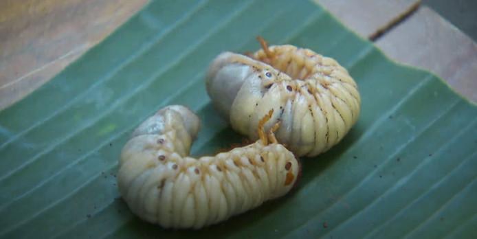 De wormen van de eetproef.