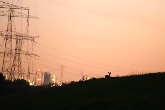 Boswachter Erik de Jonge staart soms vertwijfeld naar de horizon vol masten en molens, blokkendozen en bouwwerken.