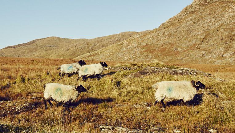 Connemara National Park. Beeld Oof Verschuren