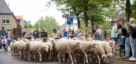 Geen schaap gaat op avontuur in Hellendoorn