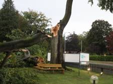 Weg afgesloten wegens omgewaaide boom in Baarn