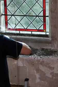 Tienduizenden vliegen verwijderd uit Helvoirtse kerktoren