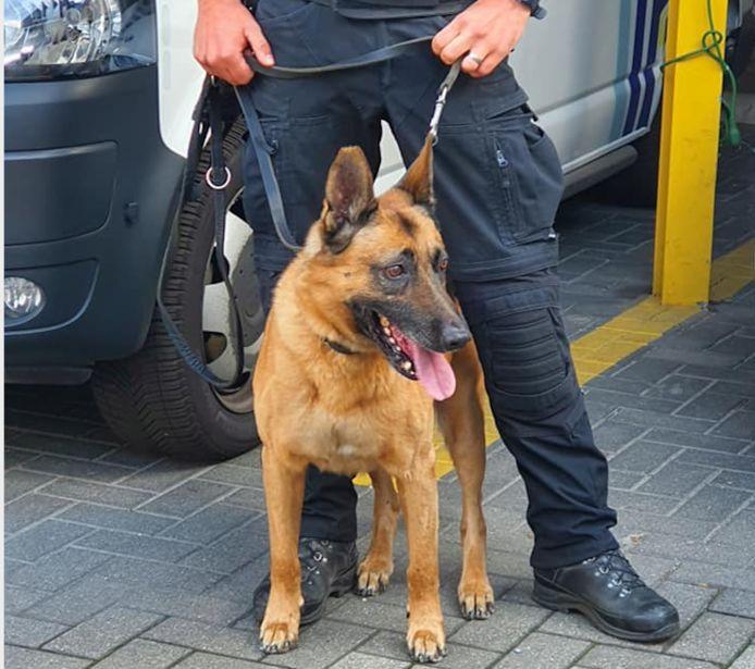 Kreeg een politiehond (niet die op de foto) effectief het bevel 'pak de makakken'?
