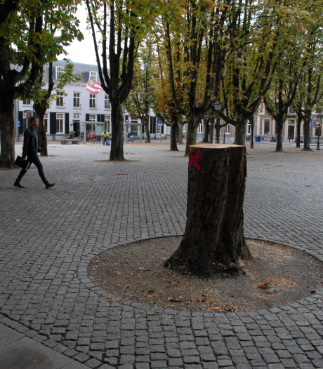 Toch weer bomen op de Bossche Parade gerooid: drie stuks
