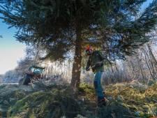 De traditionele kerstboom verdwijnt uit Nederland. Dit is de reden