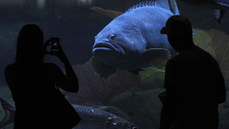 Toeristen bij SeaWorld Beeld EPA