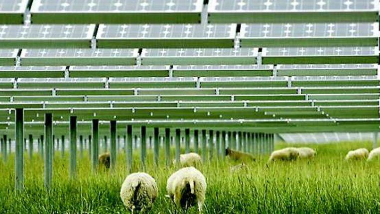 Schapen onder een installatie voor zonne-energie in Duitsland. Beeld AFP