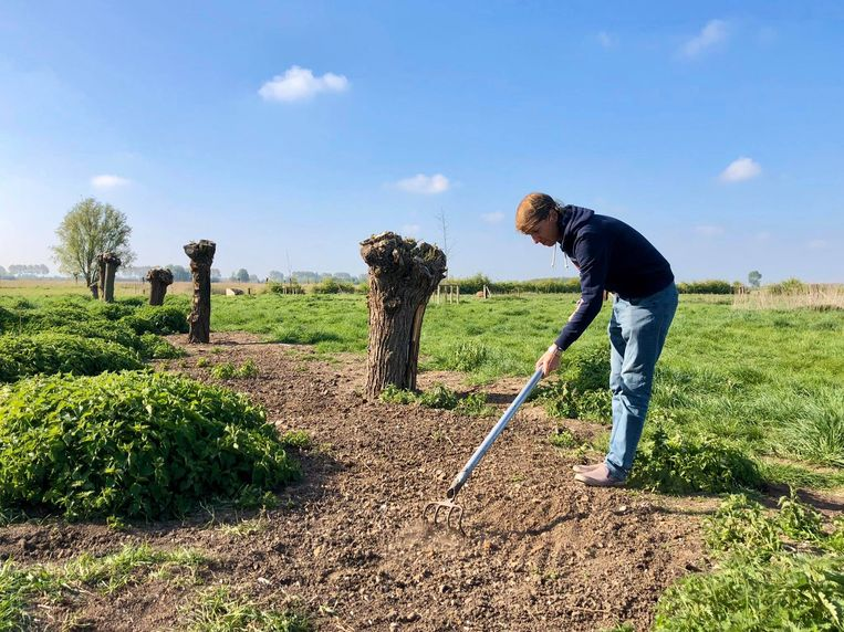 Bart zaait een bloemenweide van vijftig vierkante meter in Veurne.