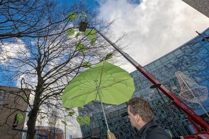 Groene paraplu's in de bomen bij het Stadhuis.