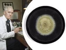 Schimmel die leidde tot penicilline moet zevenduizend euro opleveren