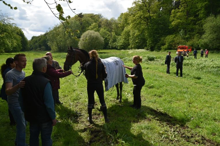 Het paard was na de interventie nog danig onder de indruk van de feiten.