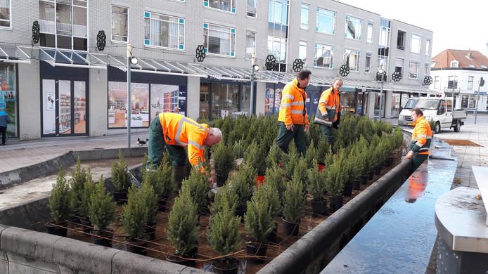 Driehonderd kerstboompjes 'planten' de groenmannen van Orionis aan het Scheldeplein.