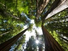 UT-onderzoek: bos stoot CO2 uit tijdens hittegolf