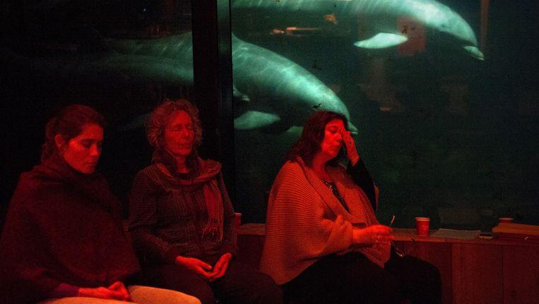 Tijdens de meditatiesessie in het Dolfinarium wordt de 'zachte en liefdevolle energie' van de dolfijnen gevoeld. Beeld Bram Petraeus