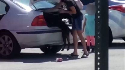 Vrouw sluit mishandelde hond op in autokoffer