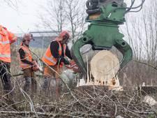 Aangifte tegen groenbedrijf om bomenkap in Almelo