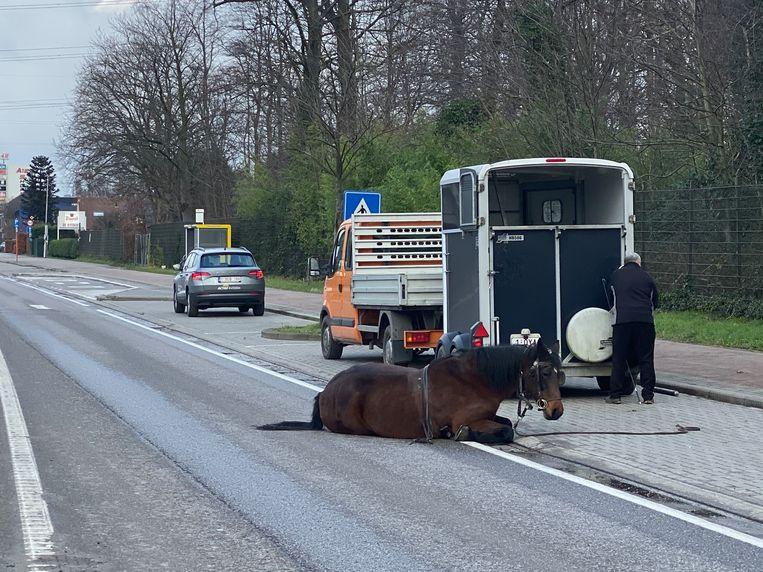 Het paard weigerde nog rechtop te staan.