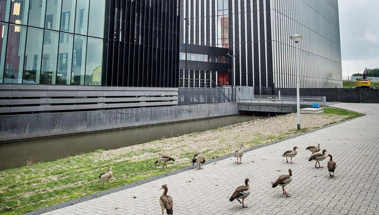 Alleen de ganzen kunnen ongestraft oversteken bij het met een slotgracht beveiligde datacentrum. Beeld Guus Dubbelman / de Volkskrant