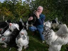 Kippen-battle in Deurne: wie heeft de mooiste, de Nederlanders of de Belgen?