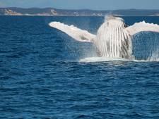 Bultrug ramt boot: toeristen vliegen door de lucht