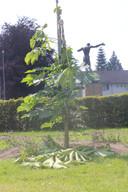 Komende zondag is hier een ceremonie gepland. De vernielde boom zal pijnlijk duidelijk maken dat er anno 2018 nog steeds onverdraagzaamheid is.