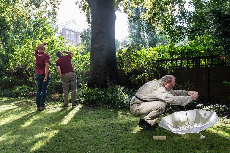 Spinnendeskundige Peter Koomen (r.) doet onderzoek, met behulp van een witte paraplu vangt hij spinnen op.  Beeld Dingena Mol